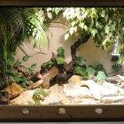 Perleidechsen im Terrarium