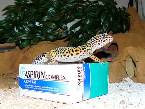 Gecko krank