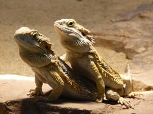 reptile-97233_1280
