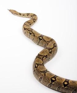 Python im Terrarium
