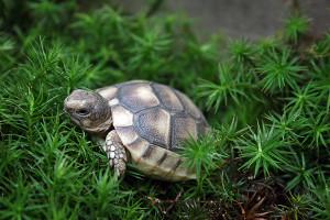 Schildkröten halten