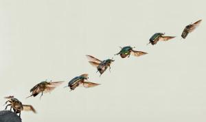 Käfer im Terrarium