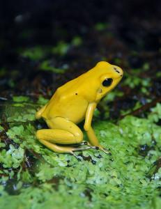 Amphibien im Terrarium