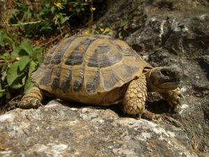Schildkröte Fettreserve