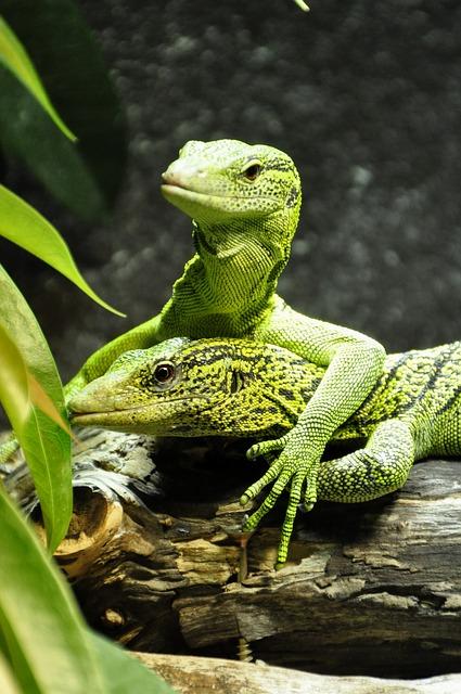 Umzug mit Terrarium Reptil