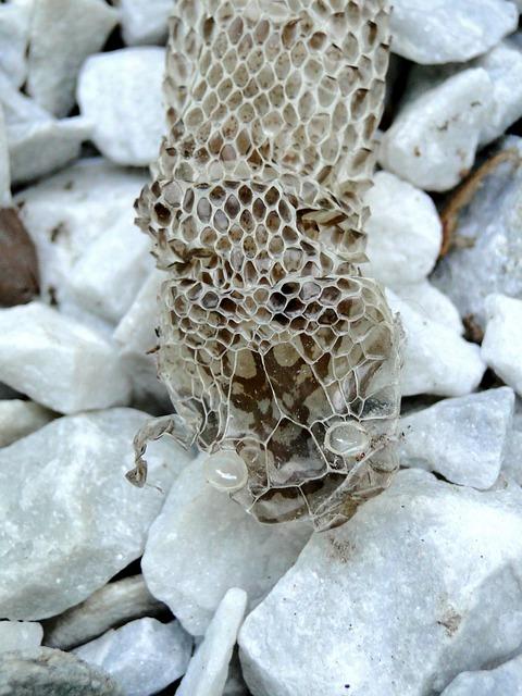 Schlangen Häutung